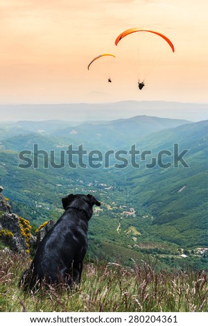 Dog whith paragliding - stock photo