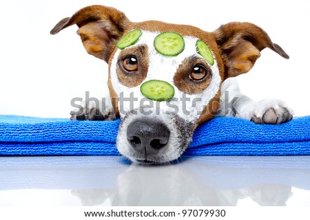 dog with a beauty mask - stock photo