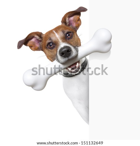 dog with a big white bone and  a white banner - stock photo