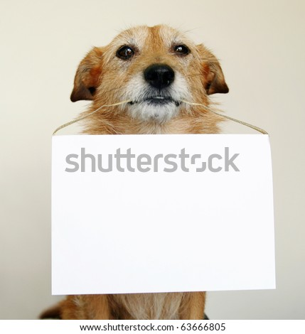 Dog with a blank sign - stock photo