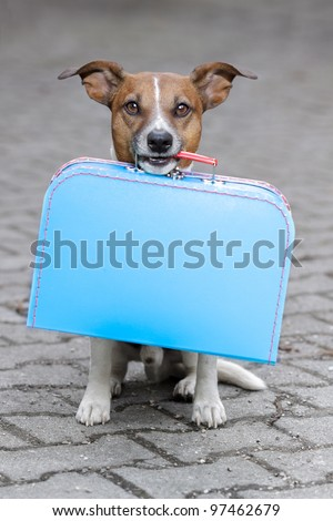 dog with a blue bag - stock photo
