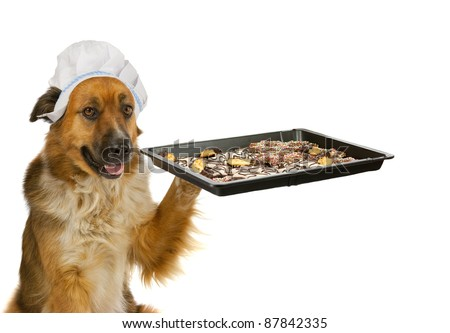Dog with a chef´s hat is offering christmas cakes - stock photo