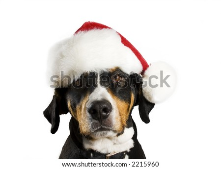 Dog with a Christmas hat (cute) - stock photo
