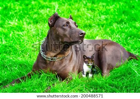 Dog with a kitten lying together on the lawn - stock photo