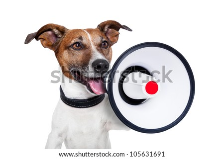 dog with a megaphone   - stock photo