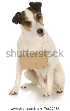 dog with a message - jack russel terrier with a blank sign around his neck - stock photo