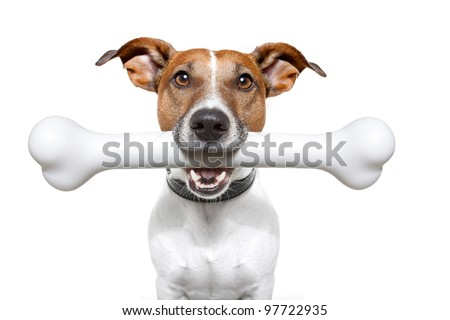 dog with a white bone