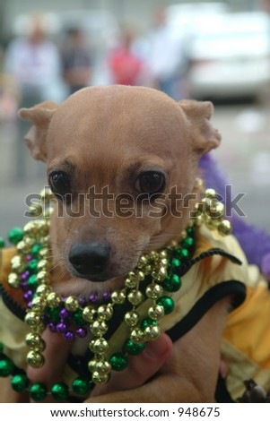 Dog with beads at Mardi Gras Parade, New Orleans - stock photo