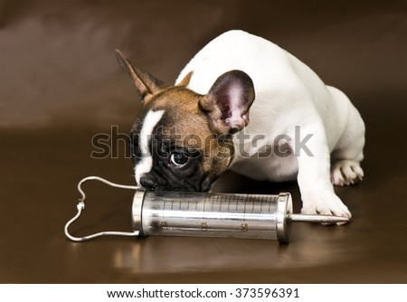 Dog with big syringe - stock photo