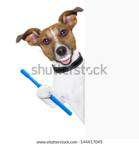 dog with big white teeth with  a toothbrush behind banner placard - stock photo