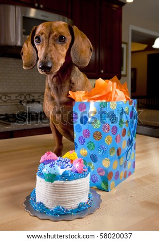 Dog with birthday cake and gift - stock photo