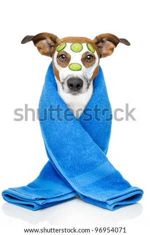 Dog with blue towel and a cream mask - stock photo