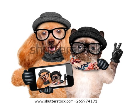 Dog with cat taking a selfie together with a smartphone. - stock photo