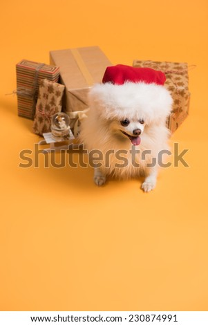 Dog with Christmas gift boxes and Santa Claus hat on yellow background - stock photo