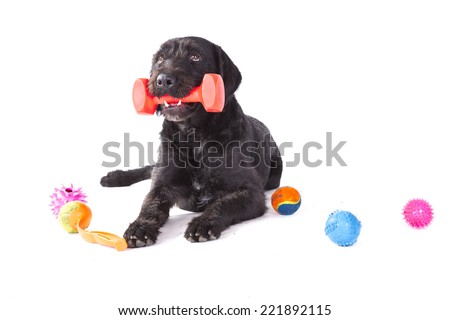 Dog with colorful toys on white background - stock photo