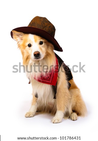 Dog with Cowboy costume - stock photo