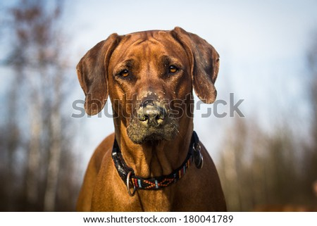 Dog with dirty nose