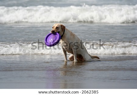 dog with disc in the mouth - stock photo