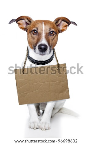 Dog with empty cardboard and relax looking - stock photo