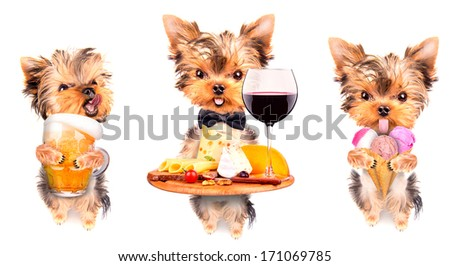 dog with food and drink -  wine, bread, cheese and grapes, ice cream, beer - stock photo