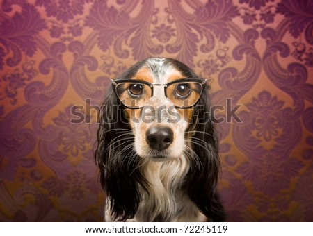Dog with glasses and serious look - stock photo