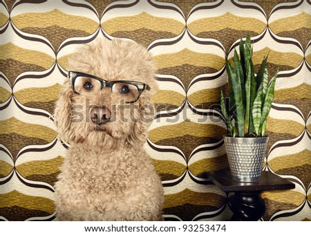 Dog with glasses in a retro setting - stock photo