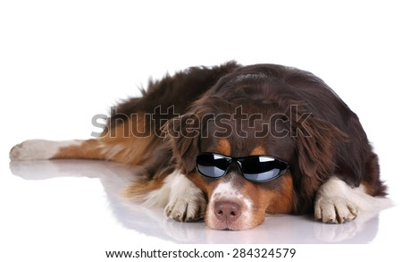 Dog with glasses lying on a white background