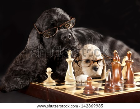dog with glasses playing chess - stock photo