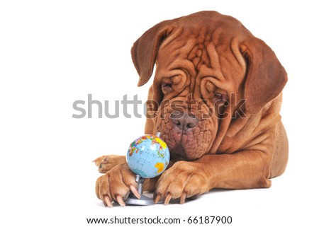 Dog with globe. Our world is in safe hands concept - stock photo