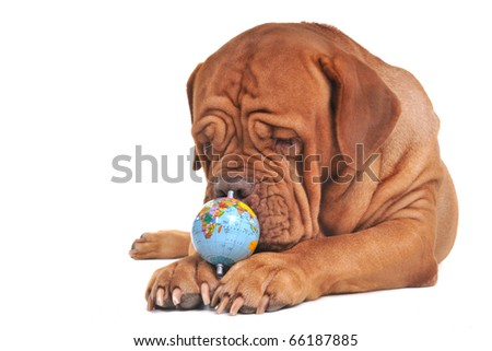 Dog with globe. Thinking of the world's future concept - stock photo