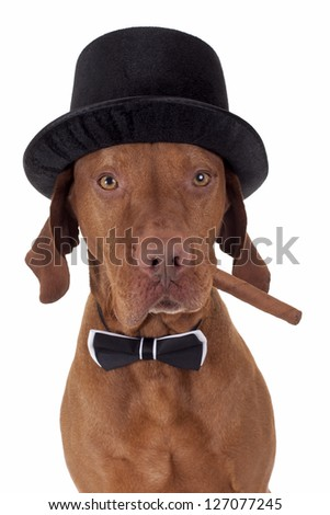 dog with hat and bow tie holding a cigar in mouth on white background
