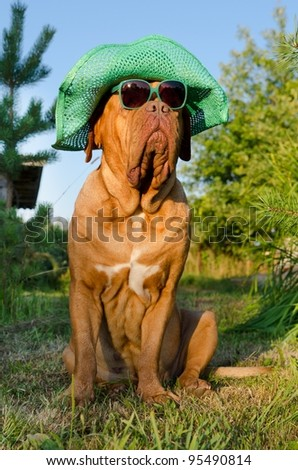 Dog with hat and glasses sitting in the garden