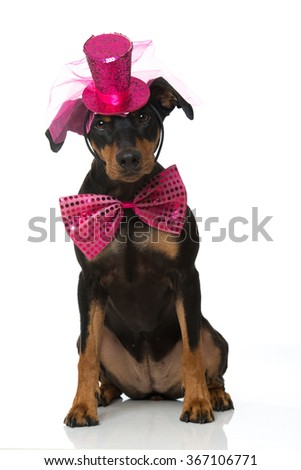 Dog with hat and tie