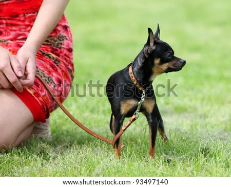 Dog with its owner is sitting on the grass - stock photo