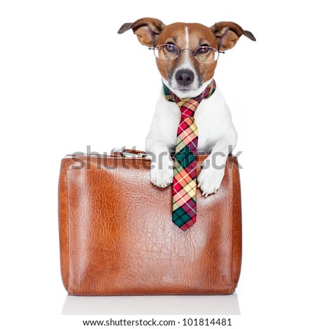 dog with leather bag - stock photo