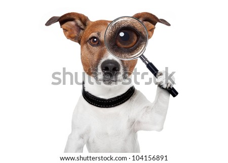 dog with magnifying glass - stock photo