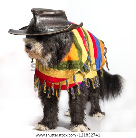 dog with Mexican sombrero and poncho - stock photo