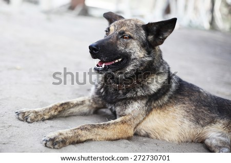 Dog with no leg. Unhappy animal - stock photo