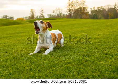 Dog with opened mouth (barking screaming, talking, complaining). NAtural  park background.