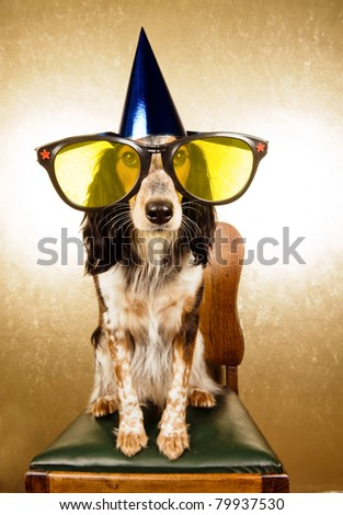 Dog with oversized party-glasses and hat is ready to start a party