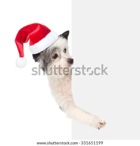 dog with red christmas hat above white placard. isolated on white background - stock photo