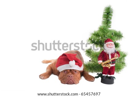 Dog with Santa's hat and Christmas decorations - stock photo