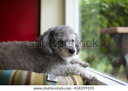 Dog with selective focus