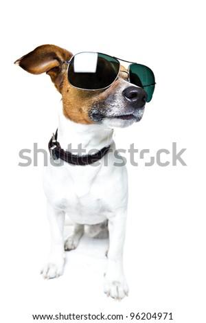 dog with shades - stock photo