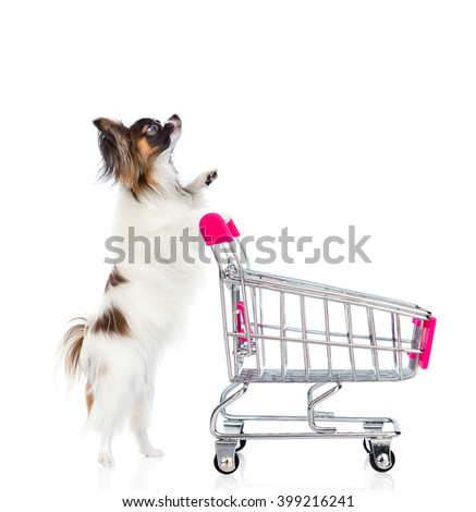 Dog with shopping trolley looking up. isolated on white background - stock photo