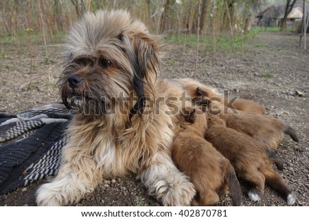 Dog with small dogs