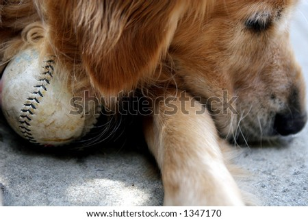 Dog with softball - stock photo
