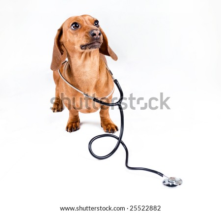 Dog with stethoscope - stock photo