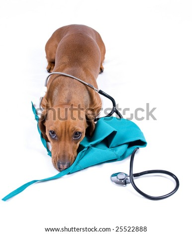 Dog with stethoscope and medical cap