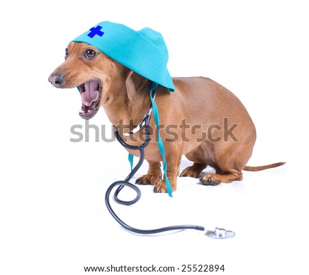 Dog with stethoscope and medical cap - stock photo